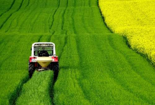 A tractor drives through a green field of canola