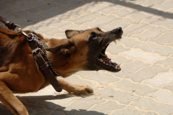 Dog Bites More Likely in Cities Than Rural Areas, U of G Research Finds