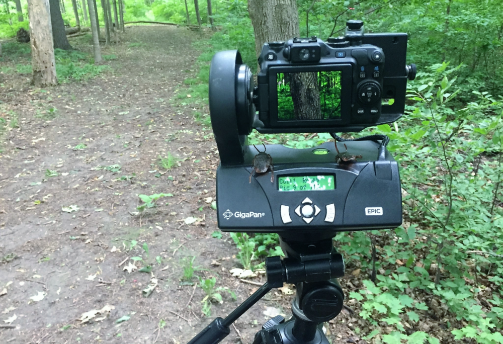 A gigapan camera on a tripod in a forest