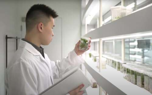 Agriculture student Weilun Lin holds a plant sample