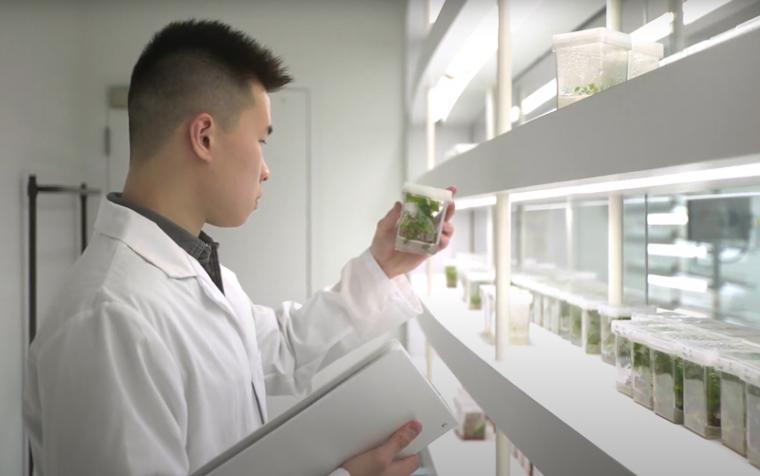 An agriculture student holds a plant sample