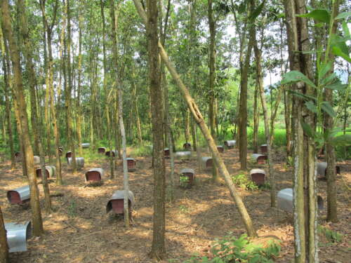 a dozen wodden bee hives sitting among trees