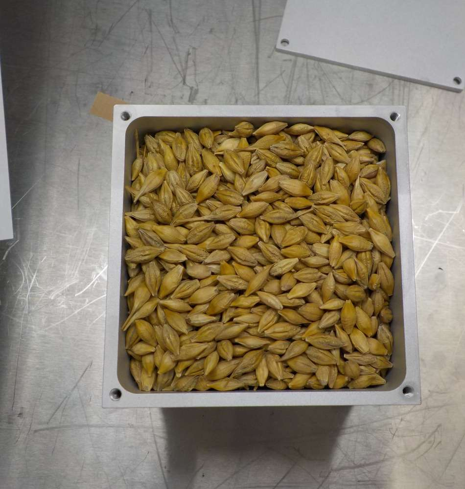 A small metal box of barley seeds is shown
