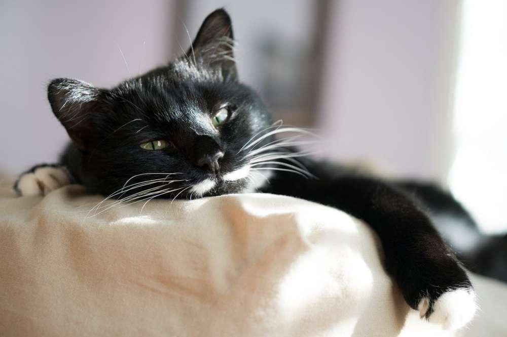 A sleepy black cat on a pillow