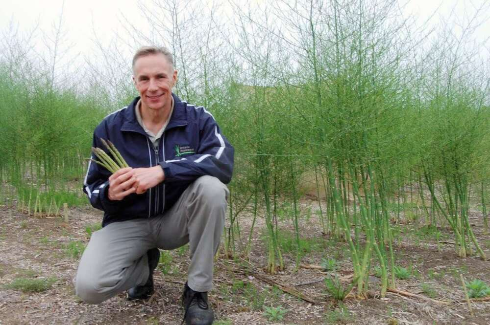 Dr. David Wolyn holds asparagus stalks while crouching in a field of asparagus in flower.