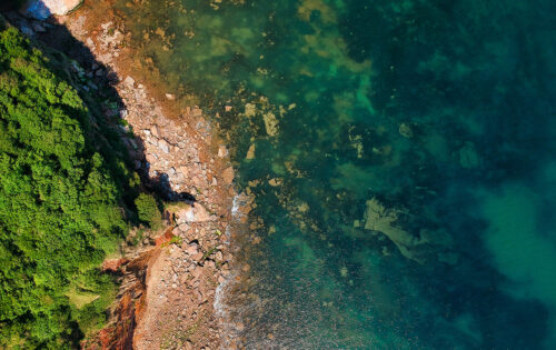 Shoreline with algal bloom growing along it