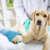 Veterinarians Shortening Antibiotic Prescriptions for UTIs in Dogs, U of G Study Finds